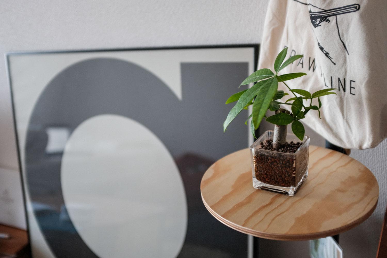 無印良品の観葉植物(ハイドロカルチャー)