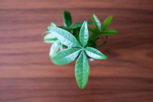 無印良品の観葉植物はどれくらいで枯れるのか?【結論: 2年は保ちました】