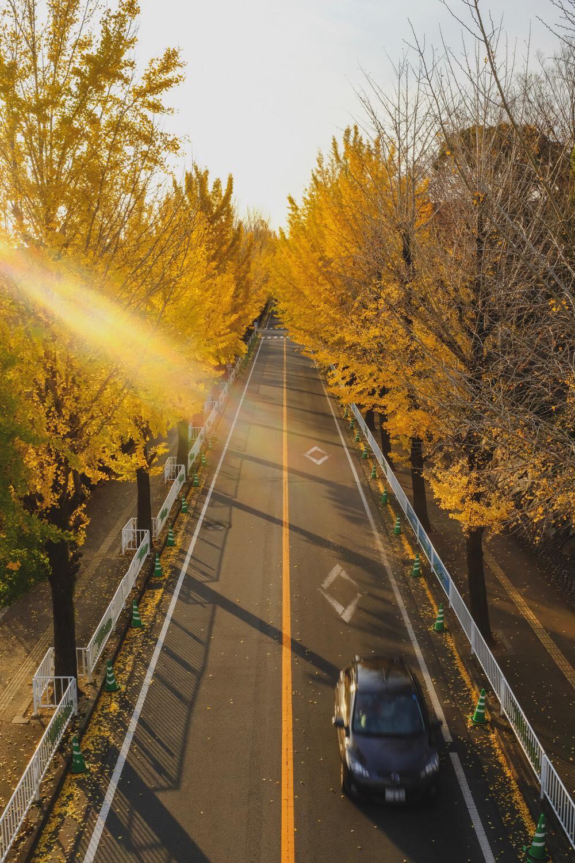 FUJIFILM X100Fで撮影した銀杏並木